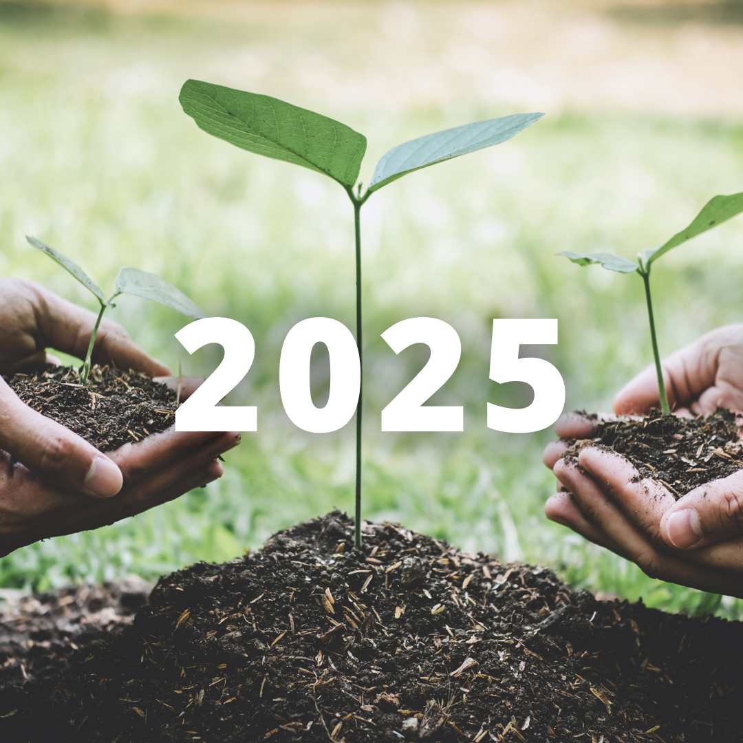 SINGLE-USE PLASTIC | THE PLAN FOR THE BAN 2025